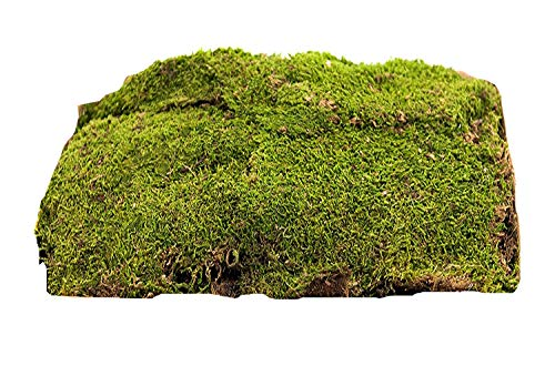Floral Moss
