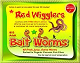 Red Wigglers (40 Adult) Live, Healthy Red Worms #1 Bait Worm