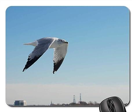 Amazon Com Mouse Pads Bird Flying Birds Flying Sky Fly