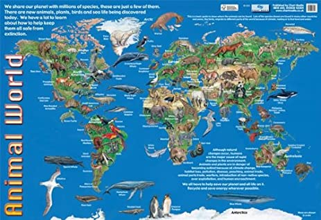 Amazon laminated animals of the world animal world map mini laminated animals of the world animal world map mini poster 40x60cm gumiabroncs Gallery