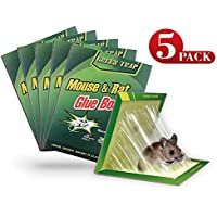 TheNoBuzz Mouse Rat Glue Trap, Strength Sticky Boards, Extra Large Size, Peanut Butter Scented, Catches Insect Lizard Spider Cockroach Rodent Scorpion Snake, Perfect Use for Indoor and Outdoor