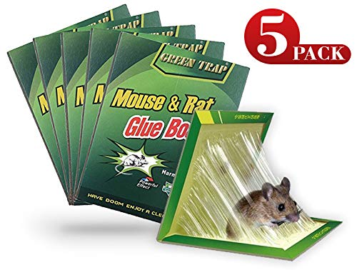 NoBuzz Mouse Rat Glue Trap, Strength Sticky Boards, Extra Large Size, Peanut Butter Scented, Catches Insect Lizard Spider Cockroach Rodent Scorpion Snake, Perfect Use for Indoor and Outdoor ()
