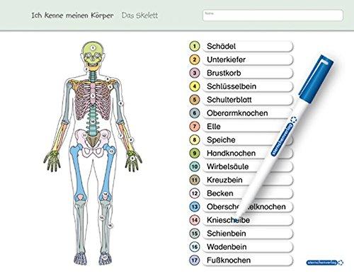 Großartig Skelett System Etikett Arbeitsblatt Fotos - Arbeitsblätter ...