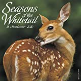 Seasons of the Whitetail 2020 Wall Calendar