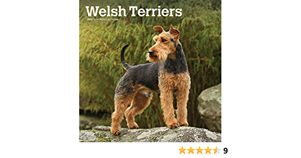 Welsh Terriers 2020 12 X 12 Inch Monthly Square Wall Calendar Animals Dog Breeds Terriers Browntrout Publishers Inc Browntrout Publishers Editing Team Browntrout Publishers Design Team Browntrout Publishers Design Team 9781975414900 Amazon Com