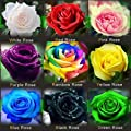 Hot Sale! 120PCS Flower Seed Holland Rose Seed Lover Gift Orange Green Rainbow RARE 23 Color To Choose DIY Home Gardening Flower