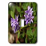 3dRose TDSwhite – Summer Seasonal Nature Photos - Floral Twin Blue Brodea Flowers - Light Switch Covers - single toggle switch (lsp_284513_1)