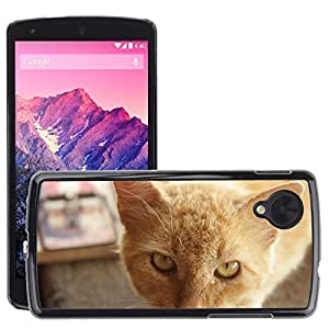 Hot Style Cell Phone PC Hard Case Cover // M00116392 Cats Cat Mousetrap Cat Face // LG Nexus 5