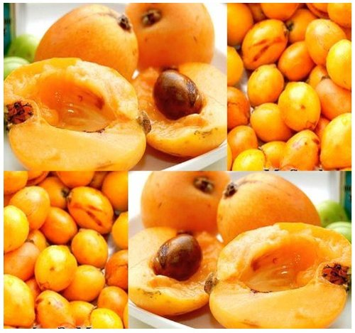 (5 LOQUAT Eriobotrya japonica TREE SEED SEEDS JAPANESE MEDLAR PLUM - HIGH IN VITAMIN A - PERFECT FOR WINE MAKING - ZONE 8a - 11)