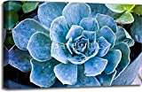 Succulent Gallery Wrapped Canvas Art (20 in. x 30 in.)