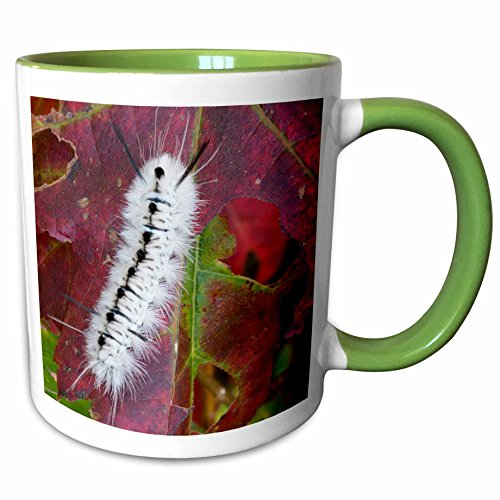 3dRose 259705_7 Usa, New Hampshire. White Wooly Bear Caterpillar e Ceramic Mug Green