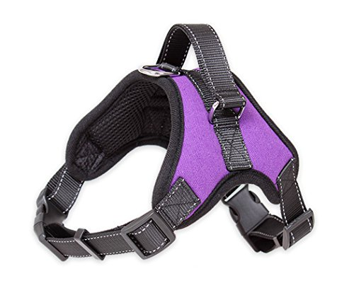 Quality Effects (KANGVO Dog Harness - Leash Included - Reflective, Adjustable Harness With Handle - No-Choke, No-Slip - for Training, Walking, Hiking - Premium Quality - No-Pull Effect (M, Purple))