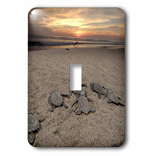 Boca One Light - 3dRose LLC lsp_86772_1 Mexico Boca Del Cielo Olive Ridley Sea Turtle Sa13 Rgo1318 Russell Gordon Single Toggle Switch