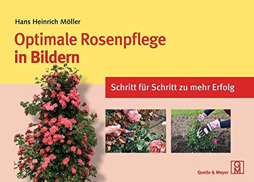 optimale-rosenpflege-in-bildern-schritt-fr-schritt-zu-mehr-erfolg