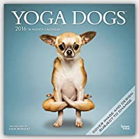 Yoga Dogs 2016 Square 12x12 Wall Calendar