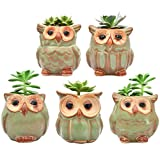 Ascrafter 5 Pcs 2.5 inch Ceramic Owl Succulent Planter Pot Succulent Container, Cactus Plant Pot, Mini Flower Pot With Holes