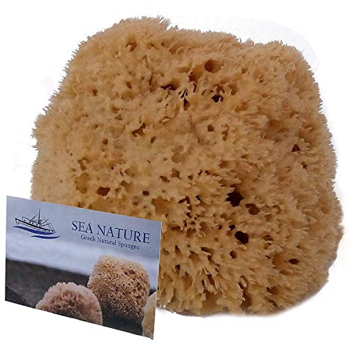 Natural Sea Sponge SEA NATURE BRAND 5-6 Honeycomb Type for Body Bath and Face Cleaning ideal for Baby Bathing - Strong and Durable Guaranteed