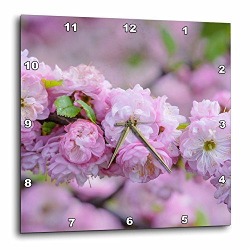 3dRose Alexis Photography - Flowers Sakura 2 - Cluster of beautiful pink flowering plum blossoms - 15x15 Wall Clock (dpp_272584_3)