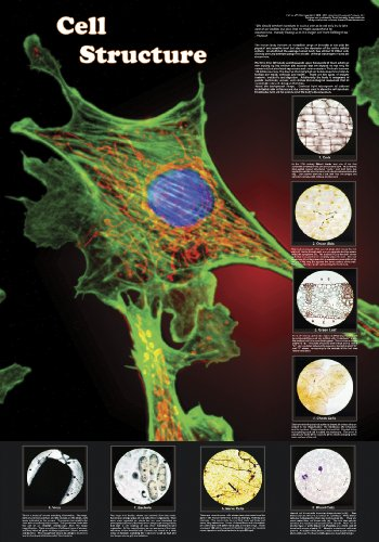 American Educational Cell Structure poster