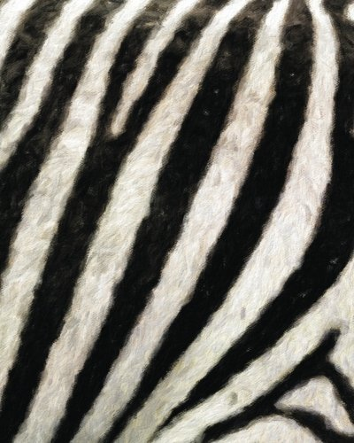 d Notebook (Texture Zebra)