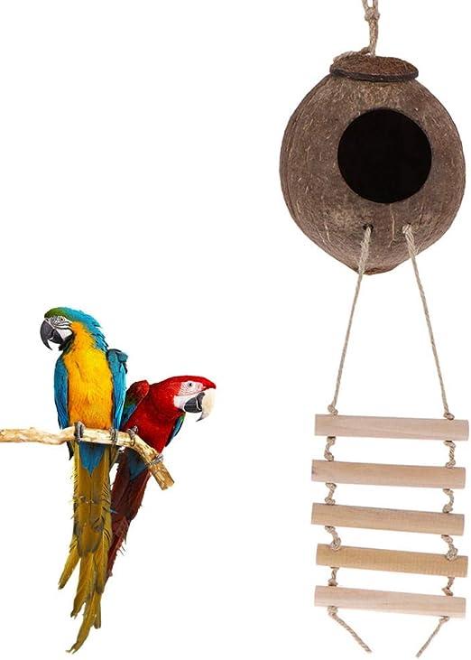 LittRur Casa de Nido de pájaro de cáscara de Coco Natural con Escalera Juguete de Loro para Mascotas Cama de pájaro para Mascotas Accesorios para Mascotas: Amazon.es: Hogar