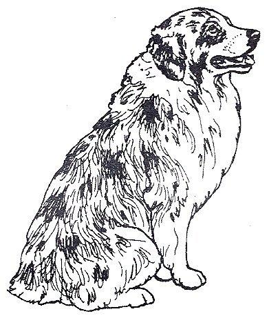 Dog Rubber Stamps - Australian Shepherd-2F Size: 1-3/4