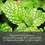 Pure Body Naturals Peppermint Essential Oil, 1