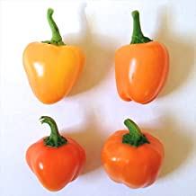 Mini Sweet Bell Pepper Collection, 60 Seeds - 3 Varieties