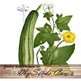 LUFFA Gourd seeds - SPONGE LOOFA LOOFAH Seed - SOAP MAKING exfoliators, sponges scrub - 130 Days (0006 Seeds - 6 Seeds - Pkt. Size) by MySeeds.Co
