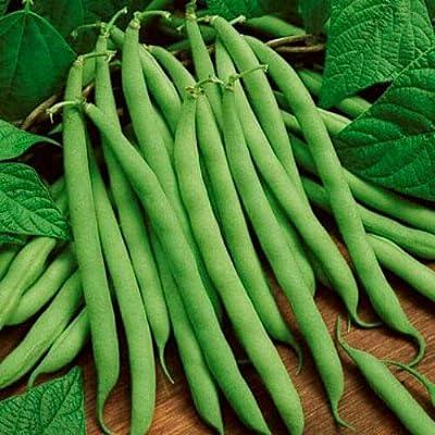 Bean Seeds, Blue Lake, Heirloom Bean, Bush Green Beans, Non-GMO, Tasty, 75ct : Garden & Outdoor