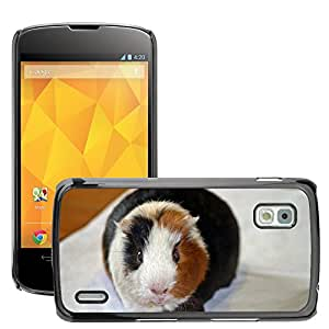 Hot Style Cell Phone PC Hard Case Cover // M00109042 Guinea Pig Amanda From The Front // LG Nexus 4 E960