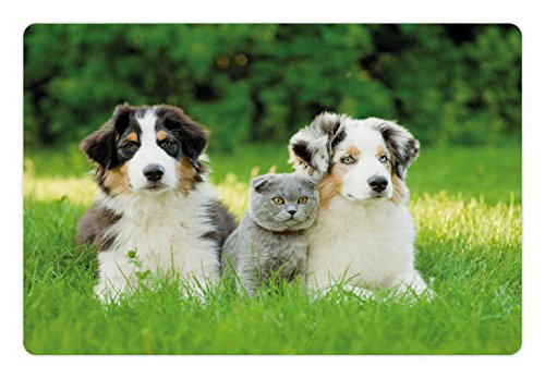 Dog Pet Mats for Food and Water by Ambesonne, Cute Pets Puppy Family in the Garden Australian Shepherds and A Cat Scenery, Rectangle Non-Slip Rubber Mat for Dogs and Cats, - & Grey Fern
