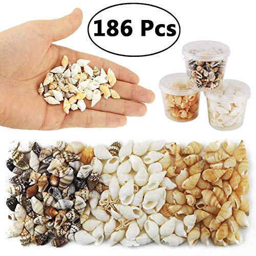 Yexpress 186 pcs Mini Tiny Sea Shells Mixed Ocean Beach Seashells, Natural Starfish for Home Decorations, Beach Theme Party, Candle Making, Wedding Decor, DIY Crafts, Fish Tank and Vase Filler