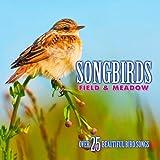 Songbirds:Field & Meadow
