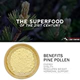 Pine Pollen Megadose - Natural Testosterone Booster - Nootropic Herb Packed with Amino Acids, Vitamin C, and More - Great for Hair and Skin Care - Gluten Free, Vegan/Paleo / Keto Friendly (250 g)