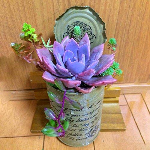 KINGDUO 200Pcs Echeverione Suculentas Semillas Mixtas Color Jard/ín Macetas Bonsai De Deco Hogar De Semilla De Flor