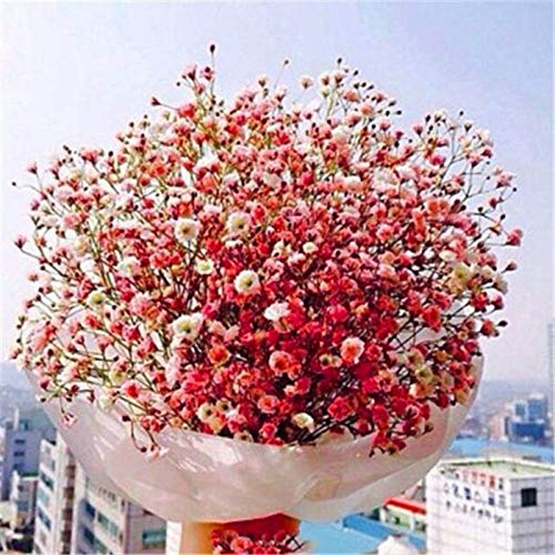 Lam Vase - Plant Plants - 100pcs Aromatic Gypsophila Seeds Potted Paniculata Garden Decoration Bonsai Flower - Plants Plastic American Grow Markers Journal Headset Decorations Vase Adults Encyclopedia Lam