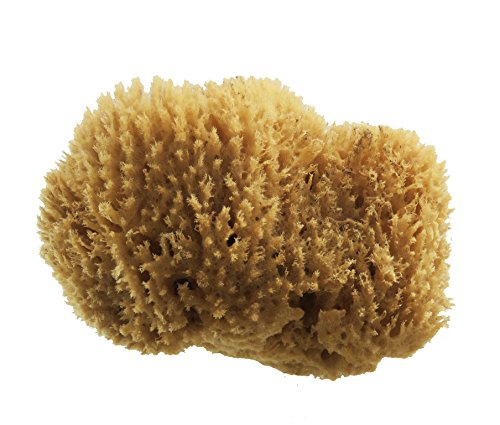 PanHy Natural Sea Grass Sponge 5-6\