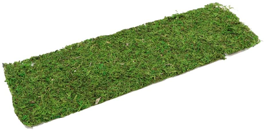 FloristryWarehouse - Hoja de musgo (56 x 18 cm), color verde natural