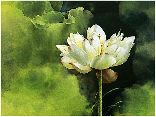 "DIY Painting By Numbers Kits Paint Adult Hand Painted Oil Paint-Raw lotus 16""x20"" (Frameless) from Fanjian"