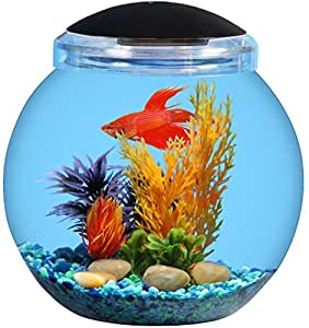 1 5 gallon betta globe bowl fish tank pet for Betta fish tanks amazon