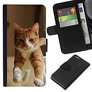 All Phone Most Case / Oferta Especial Cáscara Funda de cuero Monedero Cubierta de proteccion Caso / Wallet Case for Apple Iphone 5C // Orange Cat American British Shorthair