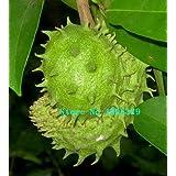 100 Seeds/pack Soursop seeds, Graviola, Annona Muricata, Annonacin,Professional Packing,Heirloom Fruit Seeds,+Mysterious Gift