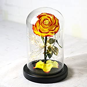 Baobab's wish Preserved Fresh Flower,Enchanted Rose,LED Light Strip,Natural Eternal Life Rose in Glass Dome Cover with Gift Box 2018(Does not Contain Battery) 3