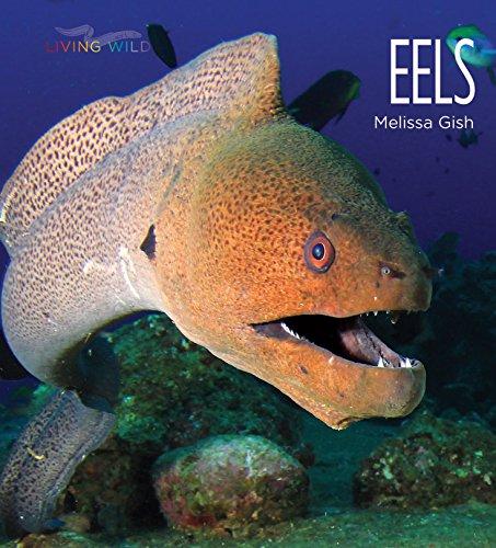 (Eels (Living Wild))