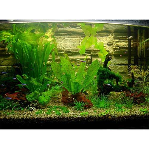 1000pcs Rare Beautiful Aquarium Grass (Mix) Water Aquatic Plant Family Easy Plant