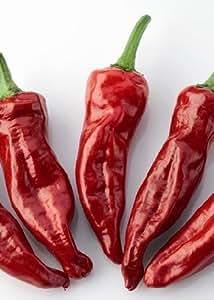 """TROPICA - Chili Pepper """"Chilli Gorria"""" (Capsicum annum) - 10 Seeds - Pepper and Chili Pepper"""