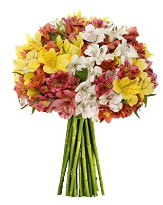 100 Blooms Assorted Peruvian Lilies