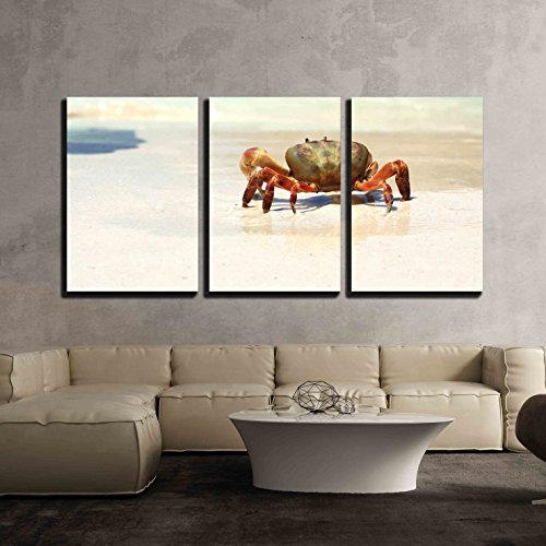 - wall26 - 3 Piece Canvas Wall Art - The Crab on The Beach - Modern Home Decor Stretched and Framed Ready to Hang - 24