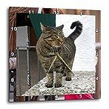 3dRose dpp_4464_3 Cat Wall Clock, 15 by 15-Inch